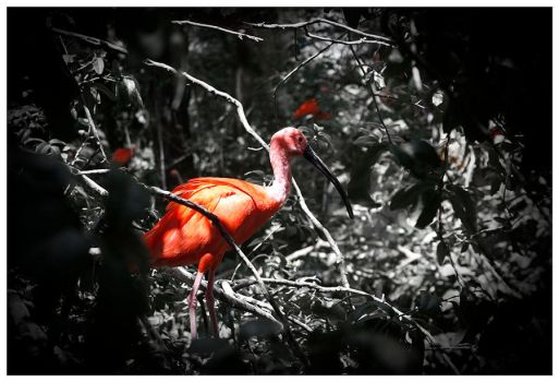Scarlet Ibis by Autopsyrotica-Art