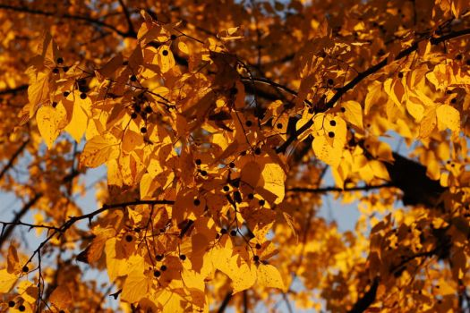 Yellow by Wilber