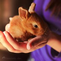0460 - Bunny by Somebody--else