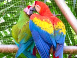 Parrot love by Seigner