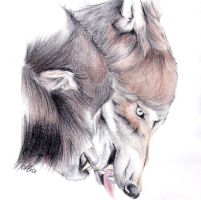 Two Fanged Wolves by AlyWiish
