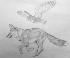 Coyote with Owl Unfinished by FeraCoyote