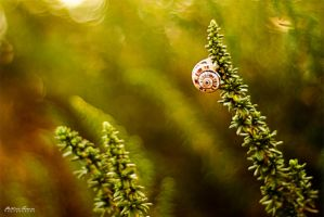 Little Tiny Snail by phferreira