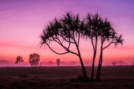 Silhouetted Dawn by Questavia