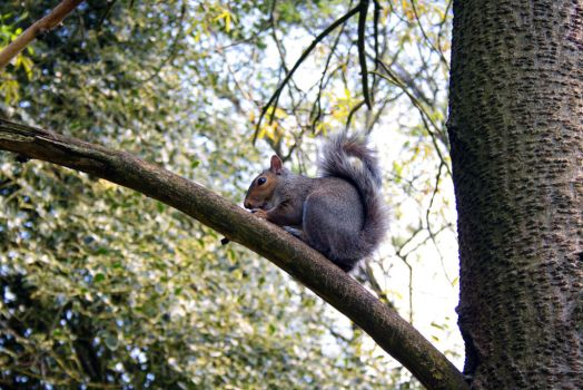 Squirrel by ClairutPhotography