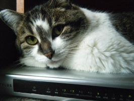 Daily Mews Photo - Router Cat - 13/8/2012 by akaLOLCat
