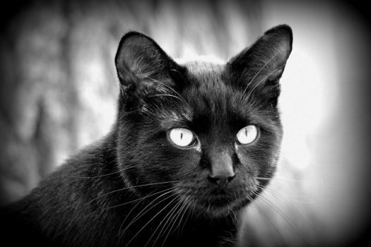 The Black Cat by BlackCatMagick