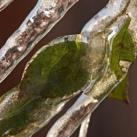 iced leaf by augenweide