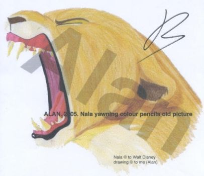 Nala yawning old picture by Alan-the-leopard