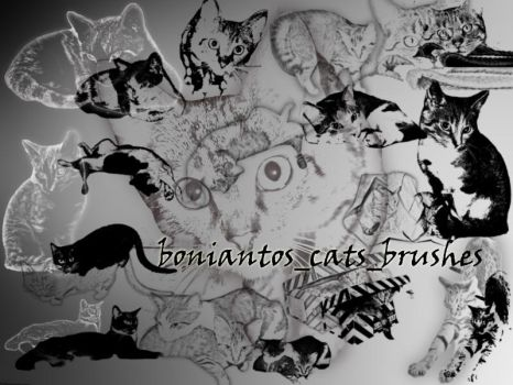 boniantos_cats_brushes by boniantos