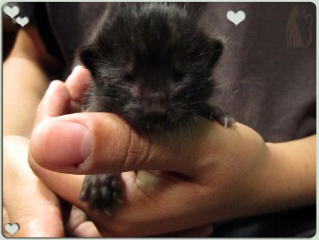 11 days old kitty, cutest thing ever! by Talty