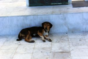 Friendly stray in Greece by far2gon