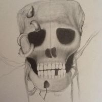 Skull by Evecast