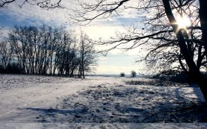 Winter Noon Wallpaper by Clu-art