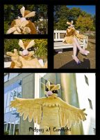 Pidgey at Connichi by Sethaa