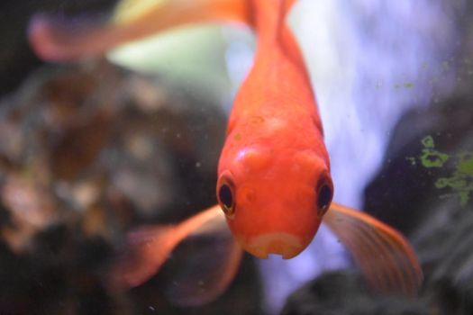 Fish Can't Blink by Clangston