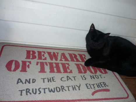 The truth of the matter by Catofhope