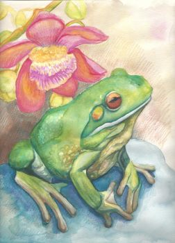 Froggy by MBoulad