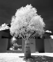 Bottle or Upside-Down Tree by colinbm1