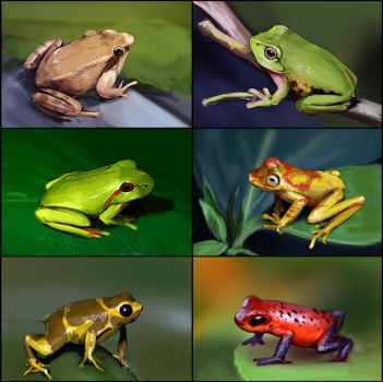 Frogs by fhilipfry