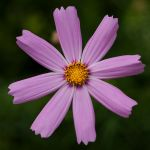 flower 156 by EphemeralMind